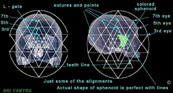 from orbs to the sphenoid, Human Body